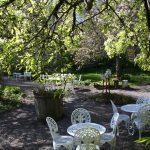Trädgården fram med de vita